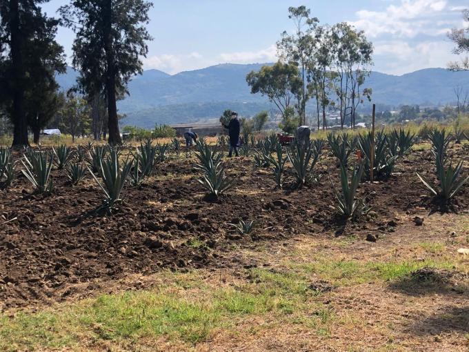 #EDOMÉX EMITE CONVOCATORIA PARA OBTENER UNA BECA EN LA ESCUELA AGRÍCOLA PANAMERICANA ZAMORANO. 4